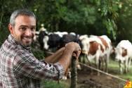 Eficiência reprodutiva do gado leiteiro: monitoramento do rebanho