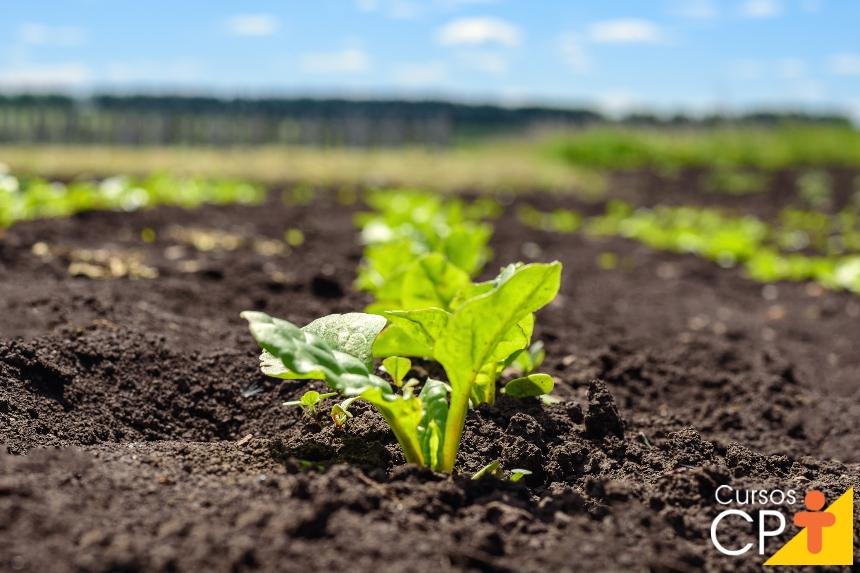 Horta caseira: como adubar as hortaliças   Artigos CPT
