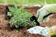 Cobertura morta em hortas caseiras: sim ou não?