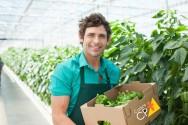 Consuma qualidade, consuma alimentos orgânicos