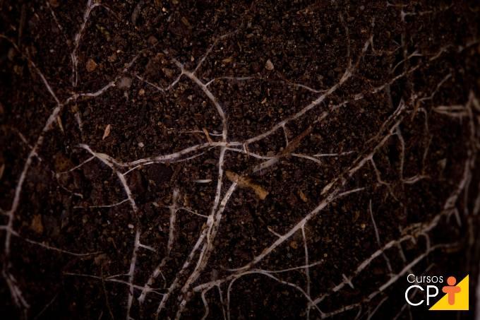 Como prevenir o ataque de nematoides às lavouras