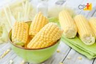 Processamento de milho verde produz delícias culinárias que aumentam a renda