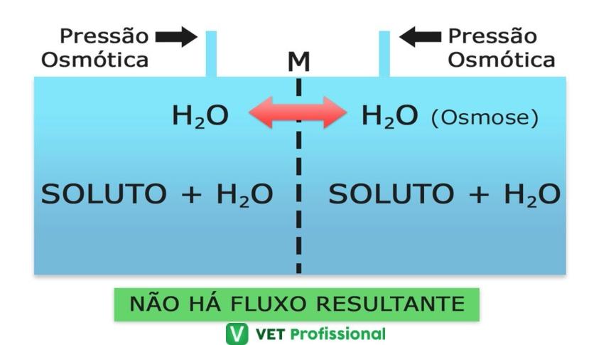 A água na manutenção dos fluidos corporais dos animais   VetProfissional
