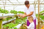 O que cultivar em um sistema hidropônico?