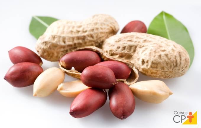 Aprenda a plantar amendoim com especialista