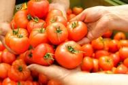 Plante tomate, a hortaliça mais universal dentre todas!