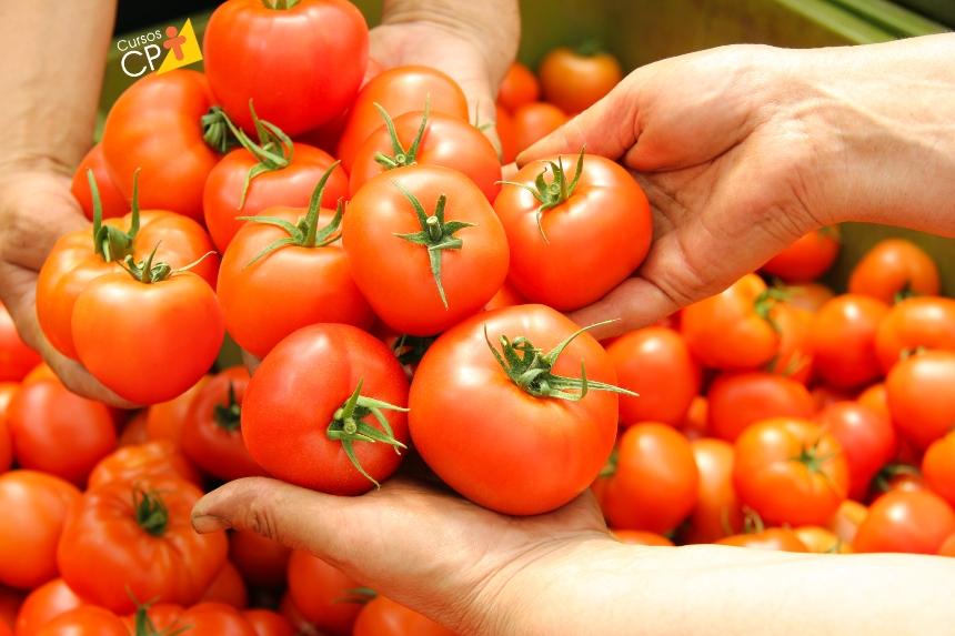 Plante tomate, a hortaliça mais universal dentre todas!   Artigos CPT