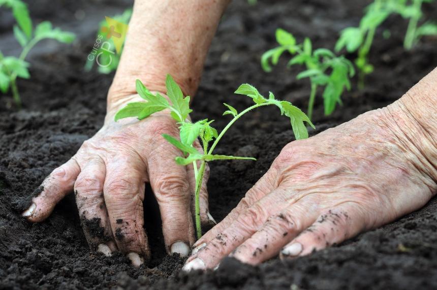 Vai plantar tomate? Conheça o clima e a época de plantio   Artigos CPT