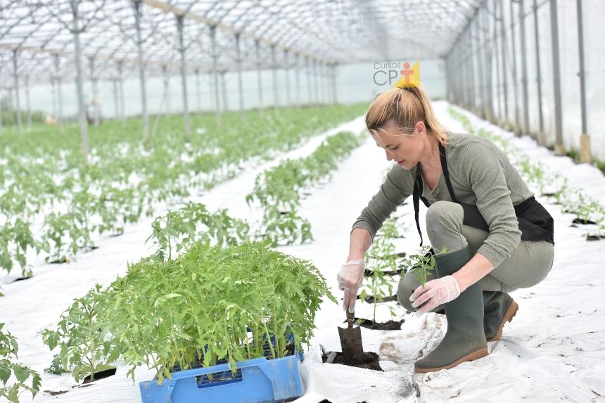 Como fazer mudas de tomate em bandejas   Artigos CPT
