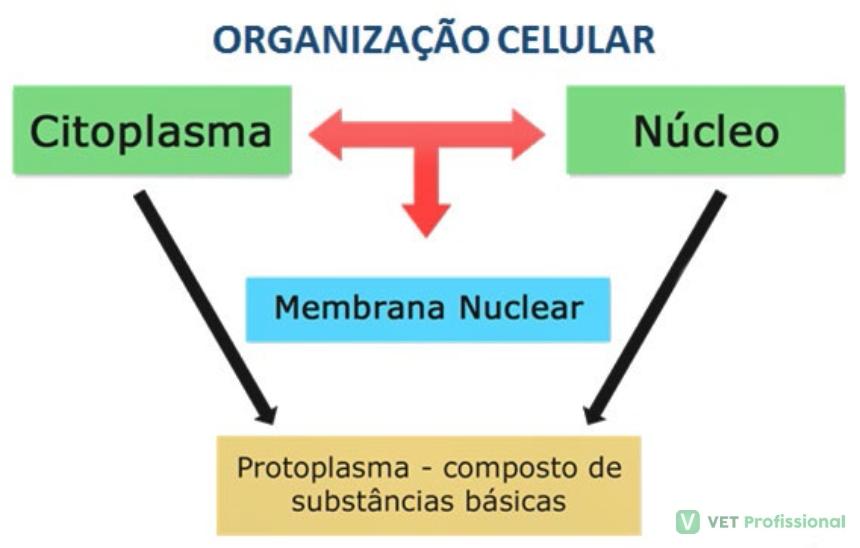 Organização celular   Artigos VetProfissional