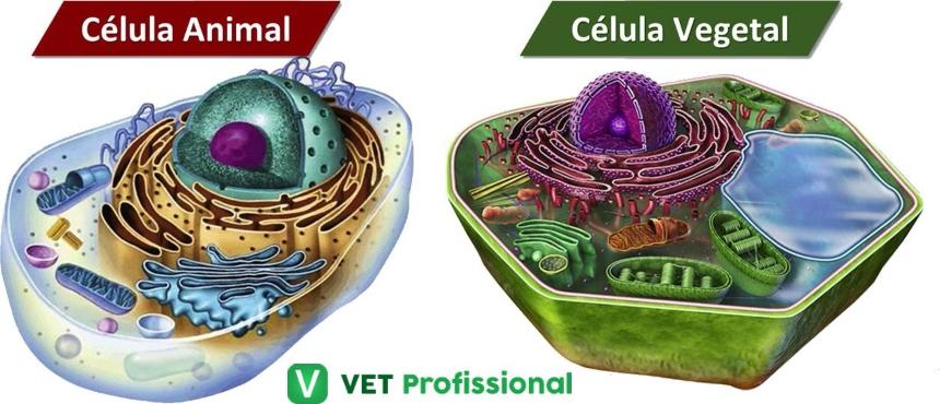 Célula animal com citoplasma e célula vegetal com protoplasma   VetProfissional