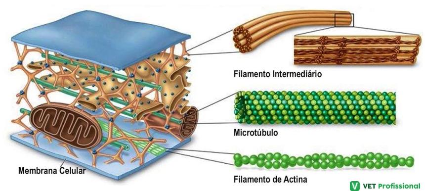 Proteínas estruturais    VetProfissional