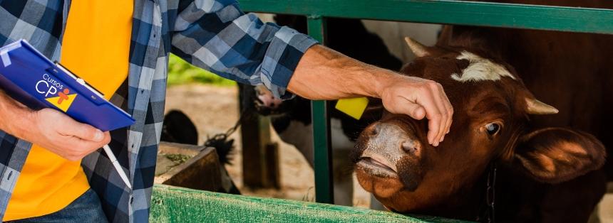 Gestão econômica e financeira na atividade leiteira   Artigos CPT