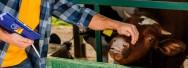 Gestão econômica e financeira na atividade leiteira