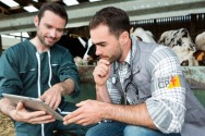 Planejamento estratégico na pecuária leiteira