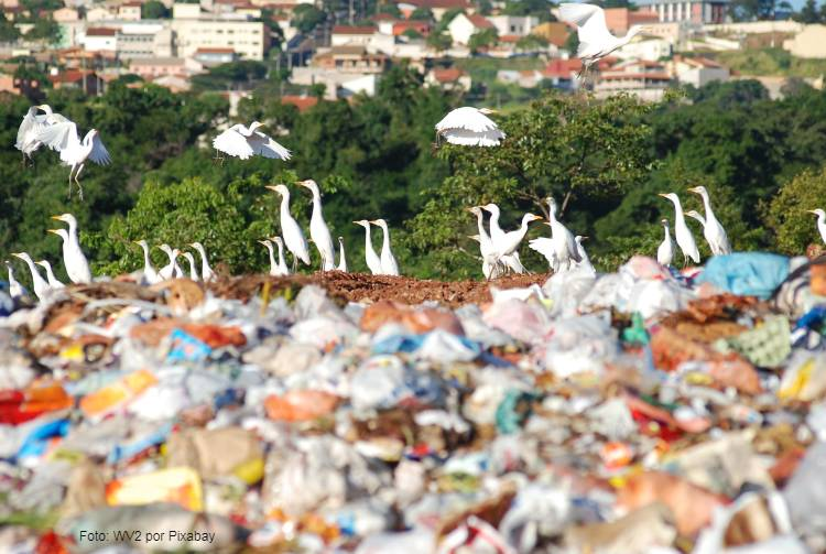 Tudo o que você precisa saber sobre poluição do solo
