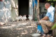 Sr. Veterinário, conheça o sistema independente de produção de frangos de corte