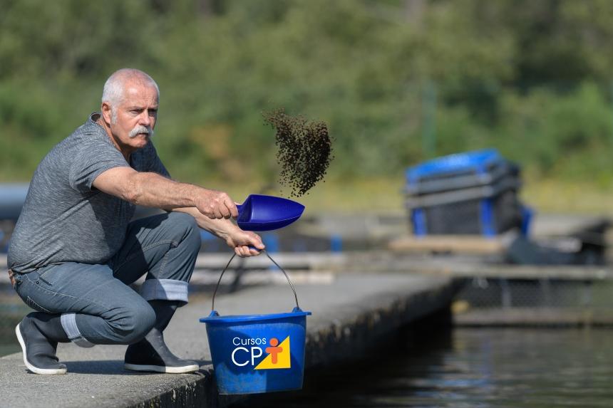 Fase de engorda dos principais peixes comerciais do Brasil   Artigos CPT