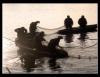 Piscicultura segue em ritmo acelerado, e não é conto de pescador