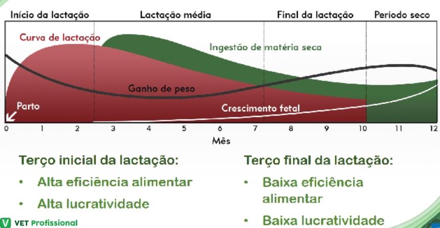 Curva de lactação de vacas    Artigos VetProfissional