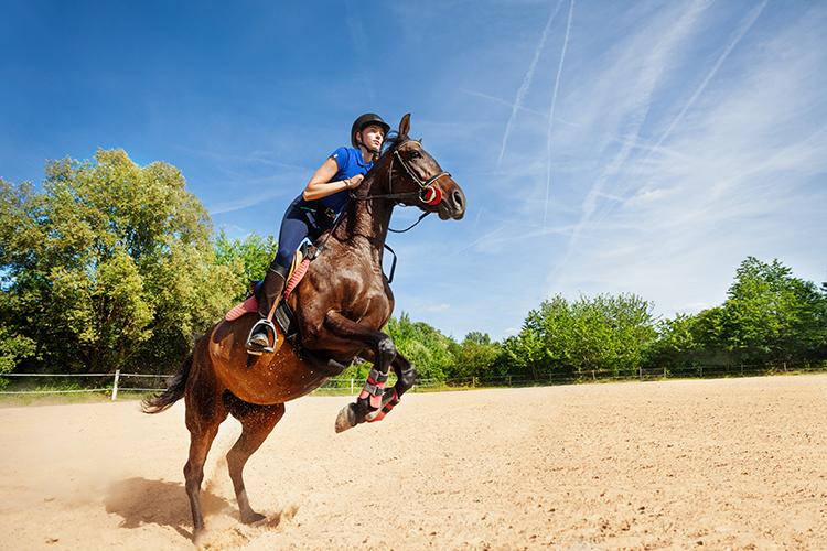 Cavalo e treinador - imagem ilustrativa