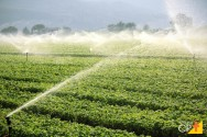 Uso do tensiômetro em programas de irrigação