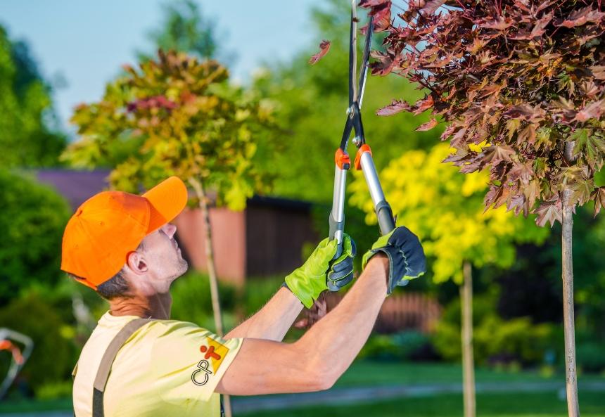 Antes de entrar para o ramo da jardinagem, responda   Artigos CPT