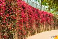 Principais trepadeiras para jardins