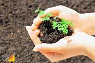 Como o Trichoderma realiza o controle biológico nas culturas