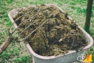 Importantes adubos orgânicos e seus benefícios