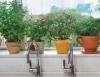 Criatividade para ter um espaço verde dentro de casa