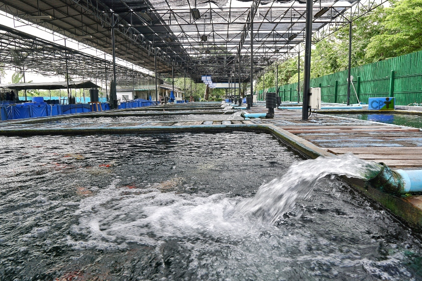 Aquaponia: quais são os parâmetros da água circulante?   Dicas CPT