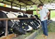 4 dicas para diminuir o estresse calórico de vacas leiteiras e aumentar a produção
