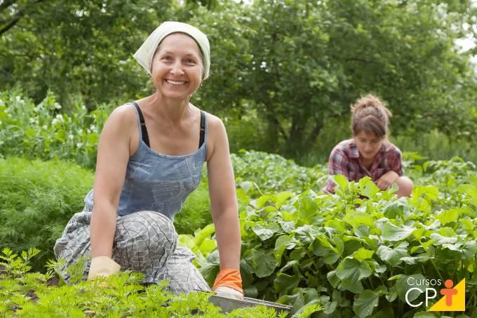Como é feito o controle de pragas na horta orgânica