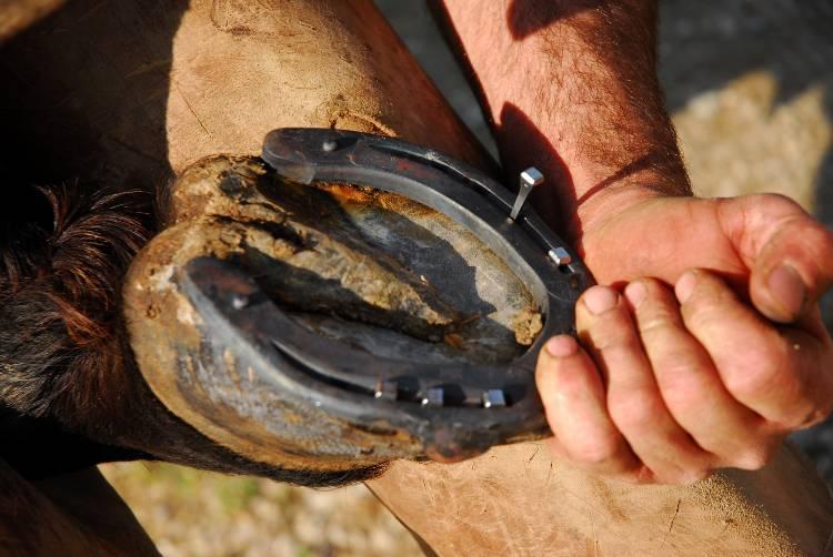 Recomendações importantes sobre ferrageamento de cavalos