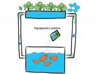 Produção e controle de custos do sistema aquapônico