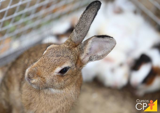3 doenças muito comuns em coelhos