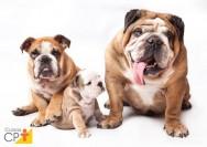 Tire suas dúvidas sobre cruzamento de cão com cadela