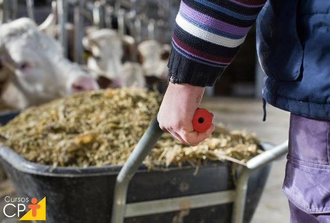 6 subprodutos da agroindústria para alimentação do gado
