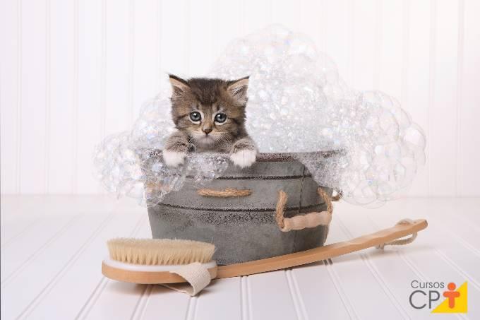 Como cuidar de gatinhos neonatos da forma correta