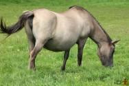 Alimentação de cavalos: como devem ser as pastagens?