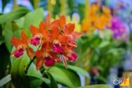 7 plantas ornamentais para cultivar em interiores