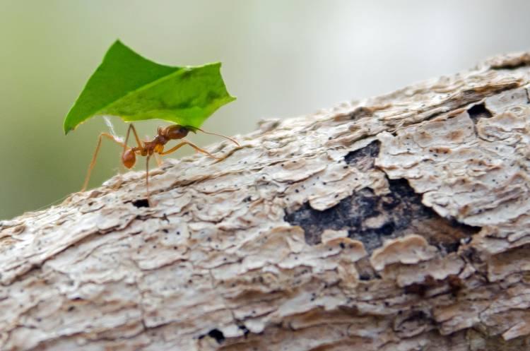 3 formas de controle das formigas cortadeiras