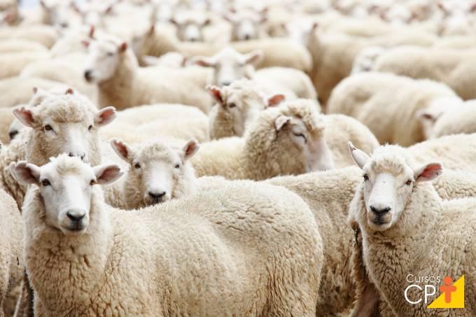 Criação de ovinos: doenças na pele e nos cascos