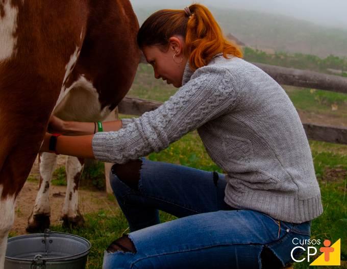 Gado gir leiteiro: características e vantagens