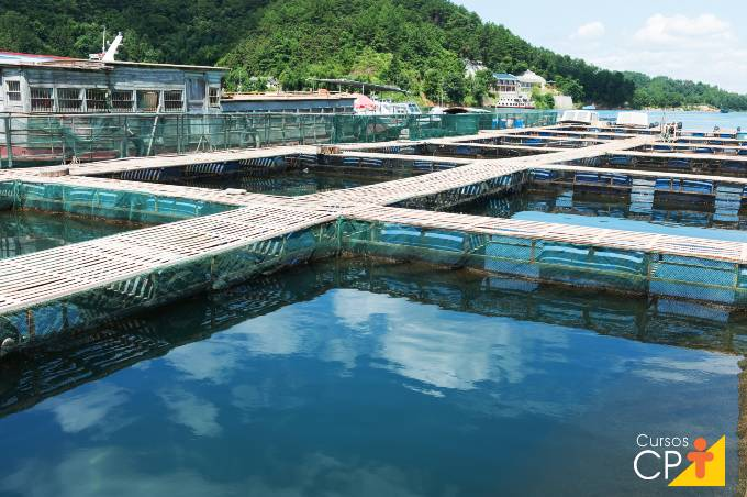 Tipos de tanques mais comuns na piscicultura