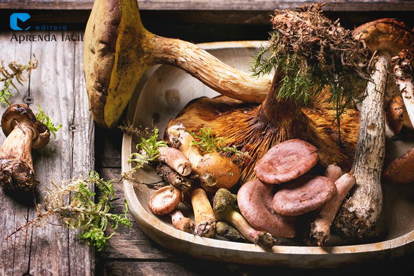 Cogumelos - imagem ilustrativa