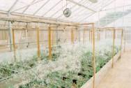 O cultivo sem solo