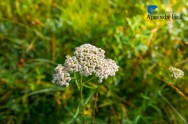 Super dicas para uma horta medicinal caseira