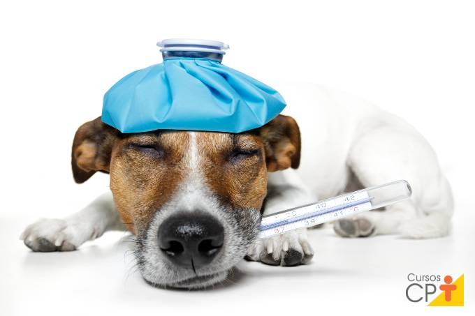 5 principais doenças em cães